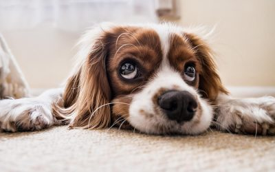Pet ownership & pet care tips for cats and dogs